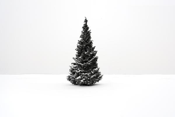 akos major tree